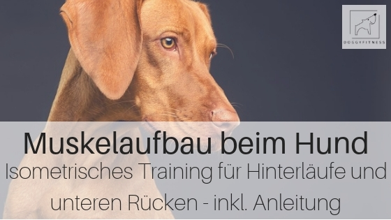 Muskelaufbau Hund: Isometrisches Training für Hinterläufe und Rücken
