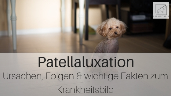 Patellaluxation: Ursachen, Folgen und wichtige Fakten zum Krankheitsbild