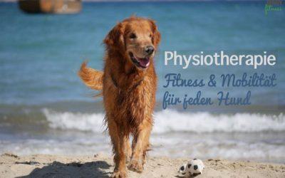Physiotherapie beim Hund – Fitness und Mobilität für jeden Hund