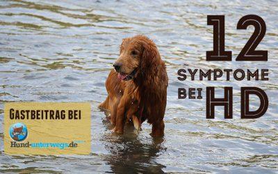 Die 12 wichtigsten Anzeichen für Hüftdysplasie beim Hund