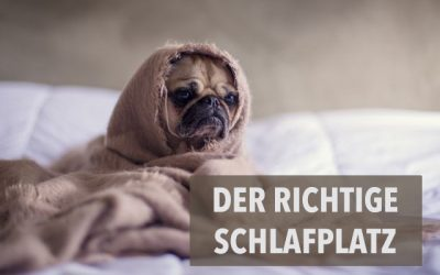 Der richtige Schlafplatz für deinen Hund – DAS solltest du unbedingt beachten!