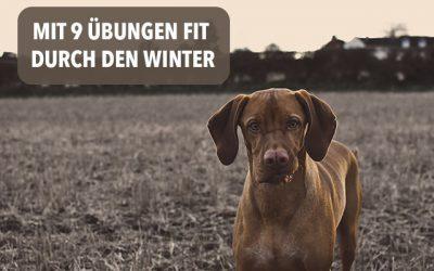 Mit diesen 9 Übungen kommt dein Hund fit durch den Winter!