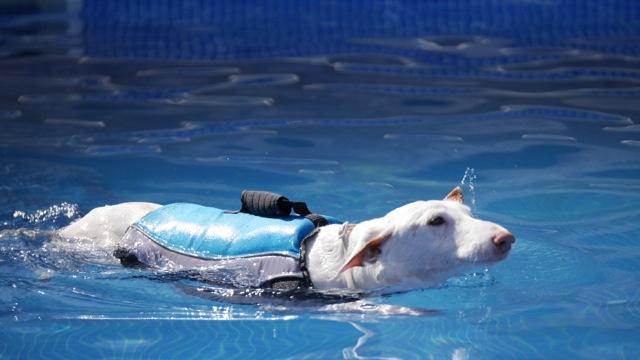 Doggy Fitness - Schwimmweste für den Hund