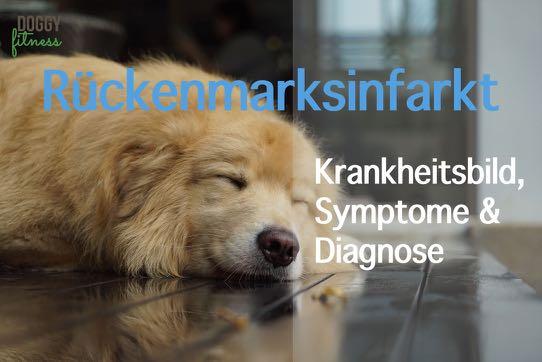 Rückenmarksinfarkt beim Hund – Krankheitsbild, Symptome & Diagnose