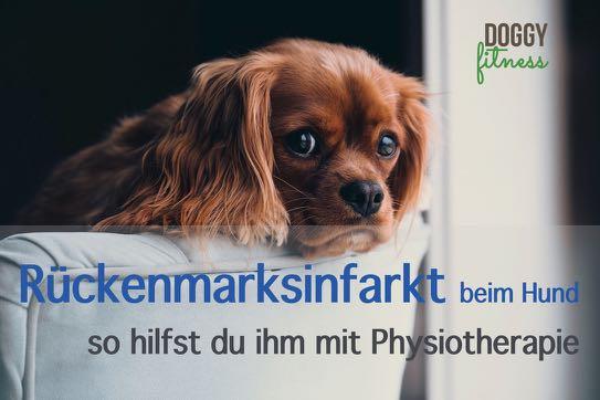 Rückenmarksinfarkt beim Hund - so hilft Physiotherapie deinem Hund Doggy Fitness