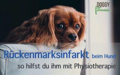 Rückenmarksinfarkt beim Hund – so hilfst du ihm mit Physiotherapie