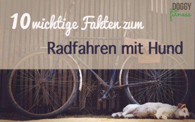 10 wichtige Fakten zum Radfahren mit Hund