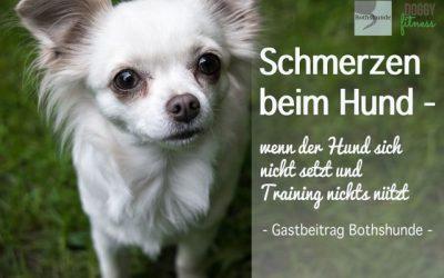 Schmerzen beim Hund – Wenn der Hund sich nicht setzt und Training nichts nützt – Gastartikel Bothshunde