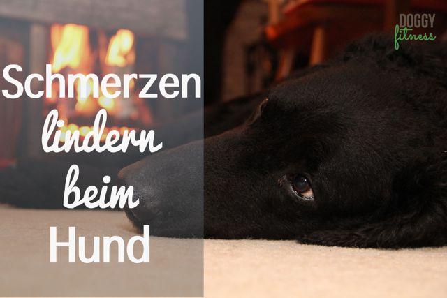 Schmerzen lindern beim Hund mit Hot Packs, Rotlicht & Co.