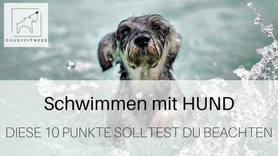 Schwimmen mit Hund – diese 10 Punkte solltest du beachten!