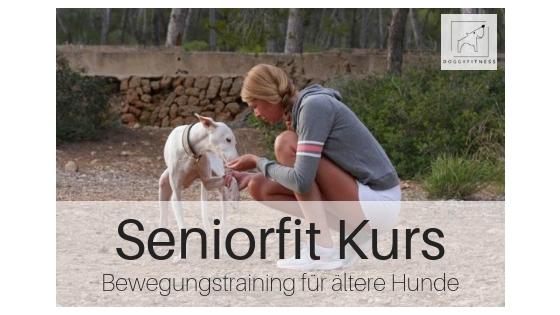 SeniorFit Produktbild - Bewegungstraining für ältere Hunde