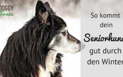 So kommt dein Seniorhund gut durch den Winter – Mein Herz bellt Ausgabe #22