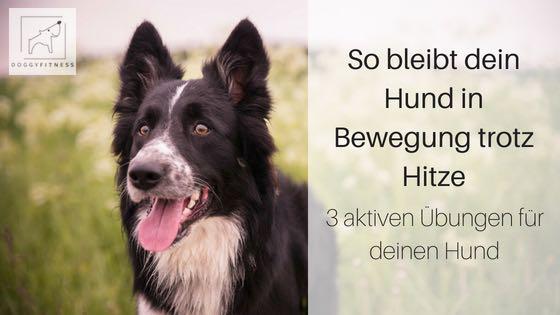 So bleibt dein Hund in Bewegung trotz Hitze –  3 aktiven Übungen für deinen Hund