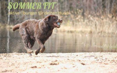 Winter Fit – Aktive Übungen für die Fitness deines Hundes (mit Trainingsplan)