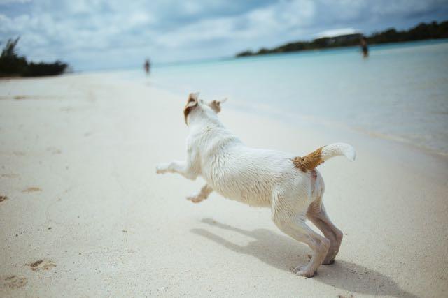 SOMMERFIT – Aktive Übungen für die Fitness deines Hundes (mit Trainingsplan)