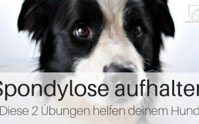 Zwei Übungen die deinem Hund bei Spondylose helfen