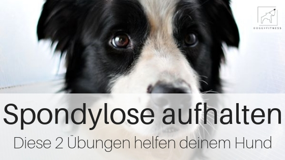 Spondylose Übungen - so hilfst du deinem Hund