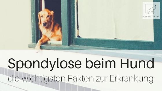 Spondylose beim Hund – das solltest du unbedingt wissen!