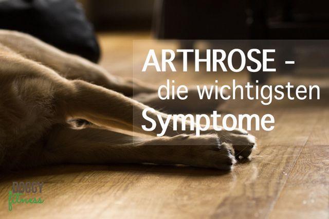 Arthrose beim Hund – die wichtigsten Symptome