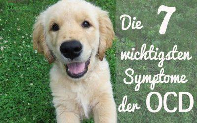 Die 7 wichtigsten Symptome der OCD der Schulter beim Junghund