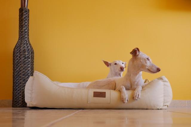 Was ein orthopädisches Hundebett bewirkt! Produkttest tierlando.de