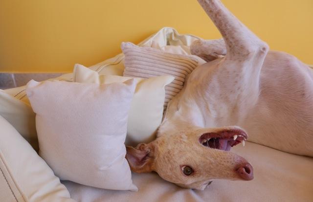 Doggy Fitness - Produkttest Orthopädisches Hundebett