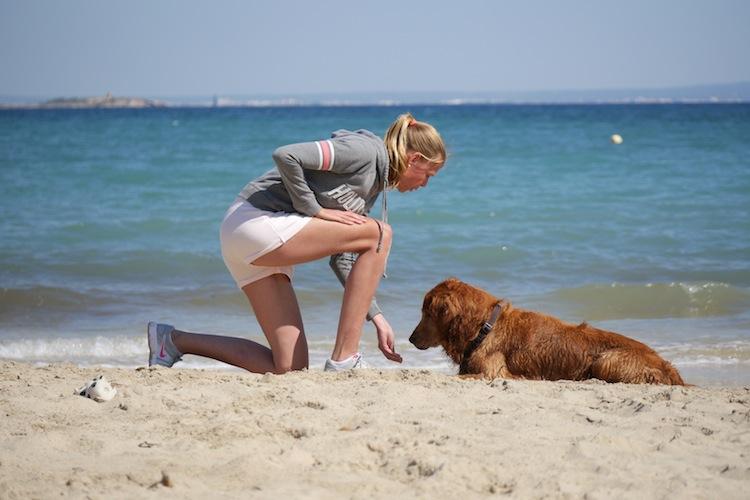 Die Doggy Fitness Online Video Kurse sind online!