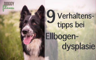 9 Verhaltenstipps bei Ellbogendysplasie