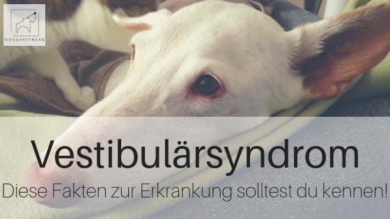 Vestibularsyndrom beim Hund Diese Fakten zur Erkrankung solltest du