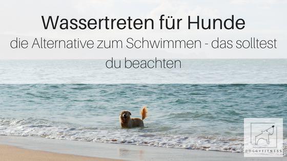 Dein Hund schwimmt nicht gern oder darf es nicht? – Wassertreten für Hunde  – die Alternative