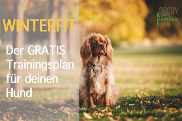 Winterfit Trainingsplan Doggy Fitness