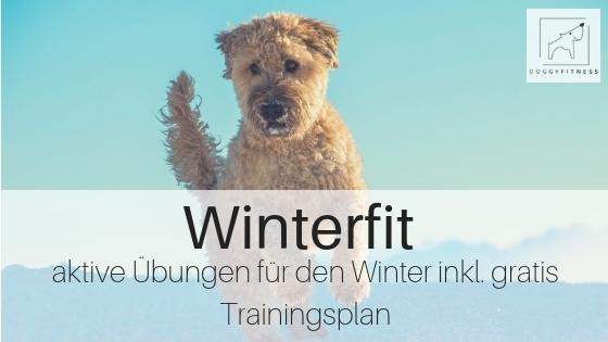 Gratis Winterfit Training – aktive Übungen für deinen Hund