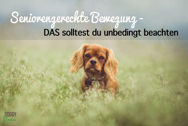 Bewegung alter Hund Doggy Fitness