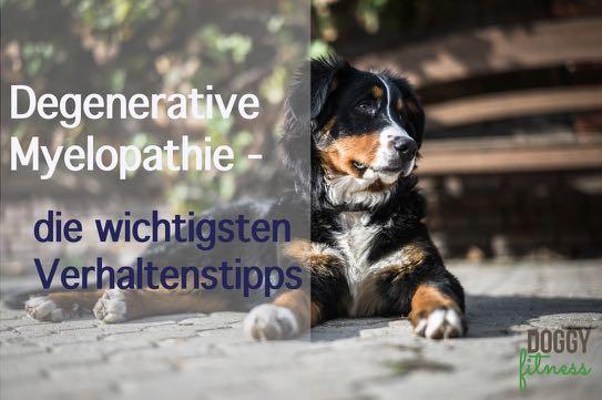 Degenerative Myelopathie – Verhaltenstipps Teil III der Blogreihe