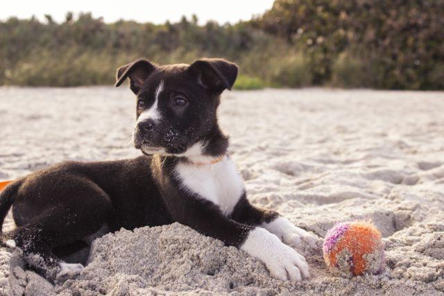 Massagegriffe für Hunde – Zirkelungen (incl. Video)