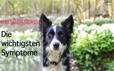 Kreuzbandriss beim Hund – die wichtigsten Symptome