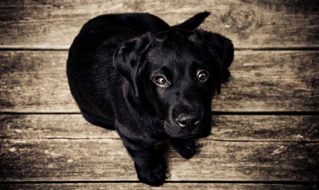 Diese zwei Übungen helfen deinem Hund bei Hüftdysplasie