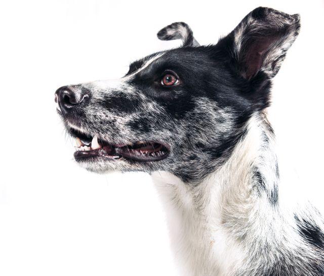 Diese zwei Übungen helfen deinem Hund bei Ellbogendysplasie