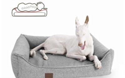 Was ein orthopädisches Hundebett bewirkt! – Doggyfit