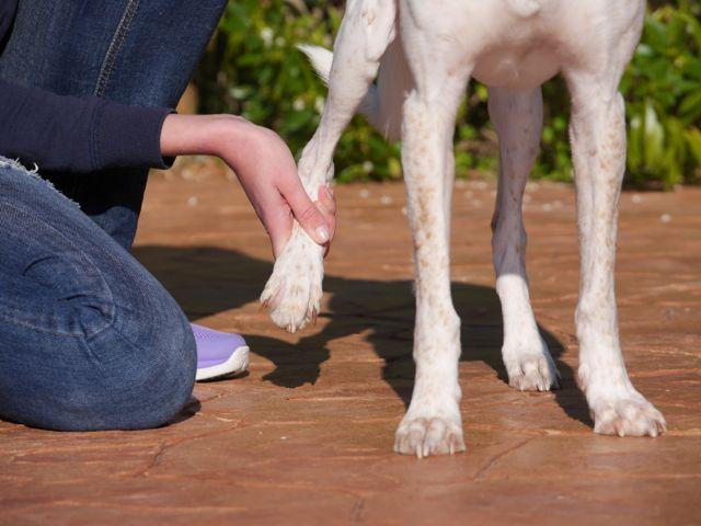 Physio-Training ist wichtig für alle Hunde mit Erkrankungen des Bewegungsapparates